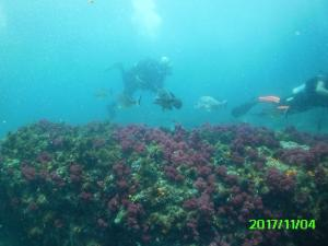 Diving over soft corals