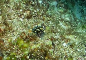 Nudi at Byron