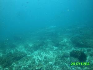 School of Yellow Tailed King Fish