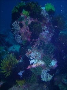 Coral Head 1