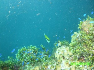 22 Coral Heian