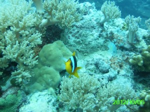 40 Friendly Clown Palau