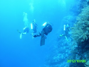 41 Wall Dive Palau