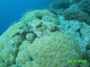 46 Crocodile Fish Palau
