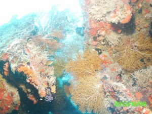 48 Spectacular Coral Buoy 6 Wreck Palau
