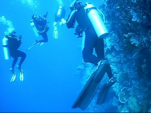 53 Wall Dive 1 Palau