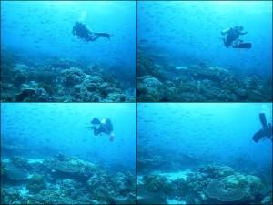 54 Fish Schools Palau