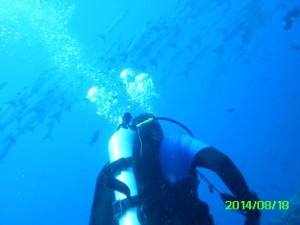 Diver watching barracuda1271