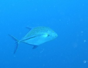 PICT1419 Tuna