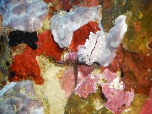 PICT1510 Coral Colours